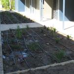 Gallery-Garden-Plants-Irrigation