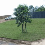Gallery-Lawn-Front-Yard