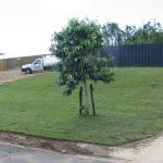 Front Lawn - Townsville Buffalo Grass