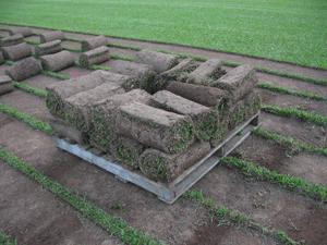 Lawn Planting by Plant-Em