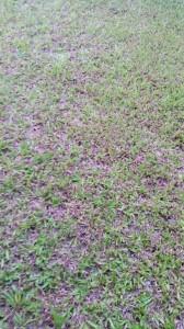 Un healthy lawn
