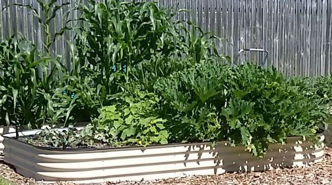 The Lot edible Garden