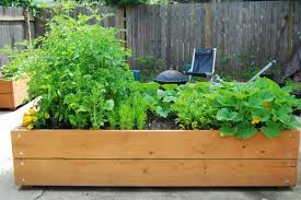 The Beginners edible Garden