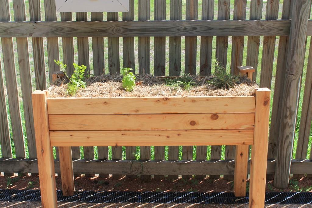The Patio edible Garden